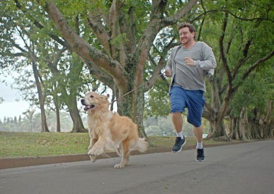 Campanha reforça benefícios da relação entre homens e cães